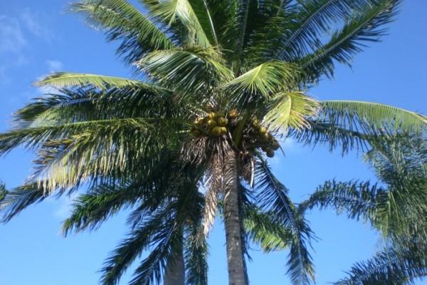 palmtree180455D7-4757-7C61-874E-B4E79056B2F5.jpg