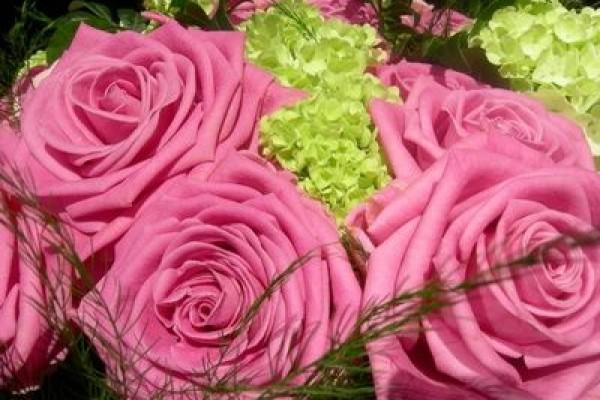 rose094E298C-587D-5F2F-E5AE-564C2982445C.jpg