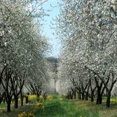 rsz_orchard_3