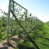 rsz_orchard_field