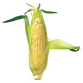 rsz_summer-sweet-corn