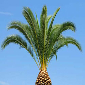 Palm-tree-trimmed-sm