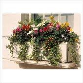 rsz_window_boxes